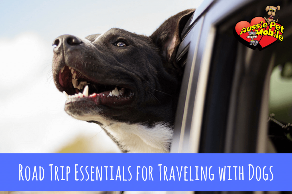 Summer Road Trip Essentials For Traveling With Dogs