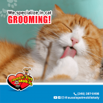 We specialize in cat grooming!