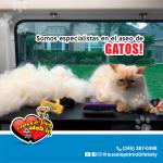 Somos especialistas en el aseo de gatos!