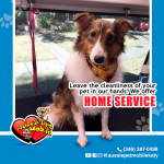 Leave the cleanliness of your pet in our hands. We offer Home Service.