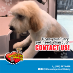 does your furry pet need a haircut? Contact Us!