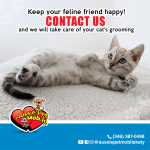 Keep your feline friend happy! Contact Us and we will take care of your cat's grooming.