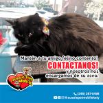 Manten a tu amigo felino contento! Contactanos! y nosotros nos encargamos de su aseo.