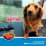 Que la mirada de tu mascota demuestre gratitud!