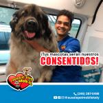 Tus mascotas seran nuestros consentidos.