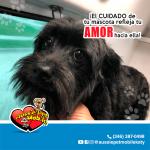 El Cuidado de tu mascota refleja tu amor hacia ella!