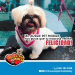 En Aussie Pet Mobile, nos gusta que to mascota reflele filicidad!