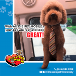 With Aussie Pet Mobile, Your pet will feel and look great!