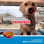 Con Aussie Pet Mobile tu mascota se sientra y lucira gandiosa