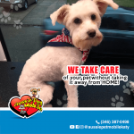 We take care of your pet without taking it away from home!