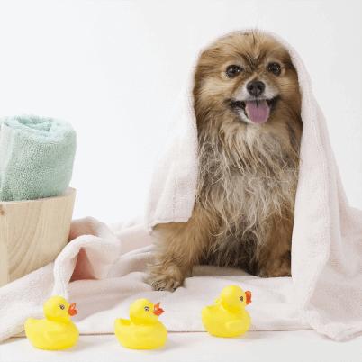 Dog Skin Care
